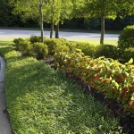 12 Plants for Clay Soil