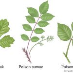 Getting Rid of Poison Ivy, Oak & Sumac
