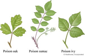 Getting Rid of Poison Ivy, Oak & Sumac - How to deal with this noxious weed so that it does not return.