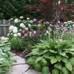 12 Fabulous Shade Loving Plants