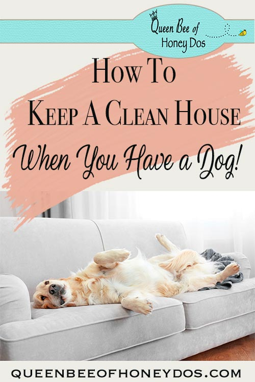 Keeping a clean house when you have dogs can seem like an exercise in futility. Over the years, I have found these tried and true methods make life easier! #pets #housekeeping #queenbeeofhoneydos