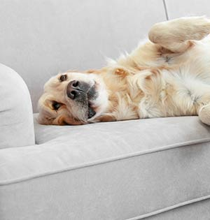 Keeping a Clean House When You Have Dogs