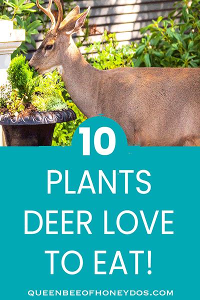 10 Plants Deer Love to Eat! (pin)
