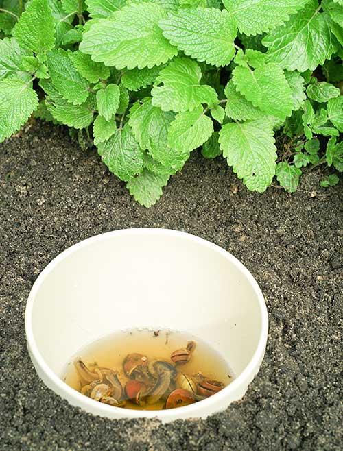 bowl of beer in garden