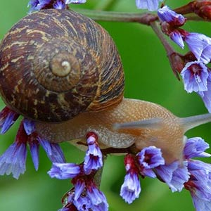 snail on a flower