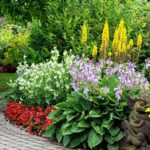 landscape walkway with hosta, daylily, and a variety of other mature plants